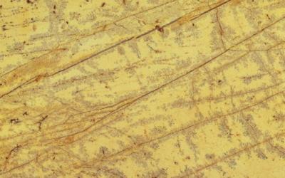 11 Amarillo Triana